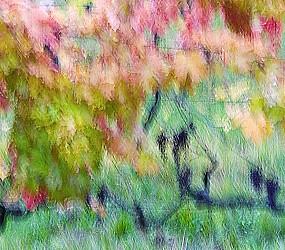 Autumnal vineyard