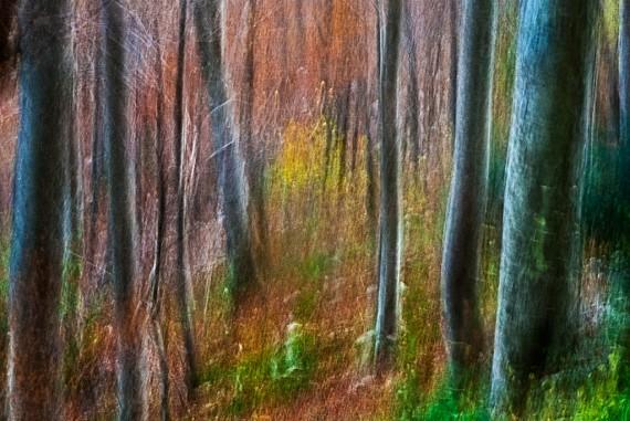 Autunno. Passeggiando nel bosco